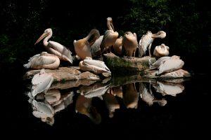 Fotograaf: Peter Moerkens